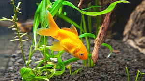 Image result for how to clean your fish tank