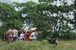 imagem de Casinhas Pernambuco n-19
