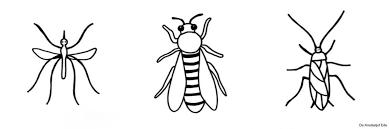Kleurplaten Kriebelbeestjes Gratis Kleurplaat Insecten Insekten