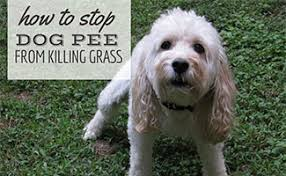 dog killing gr how to stop stop