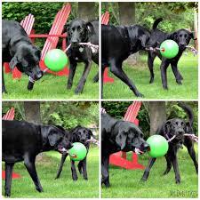 laila and meera playing tug of war with the tuggo dog toy