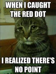 Best of the 'Depressed Cat' Meme!   SMOSH via Relatably.com