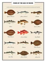 Fish Poster Species Identification Chart Charting Nature