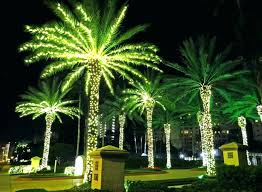 image of rope outdoor lighted palm tree