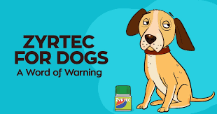 Zyrtec for Dogs: Don't Make This Silly Mistake | Honest Paws