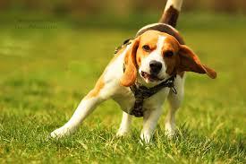 Morgen Vielleicht Dumme Sprüche Auf Der Hundewiese Geschickt