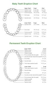 When Do Babies Get Teeth Chart Tooth Eruption Why Do We Lose Baby Teeth