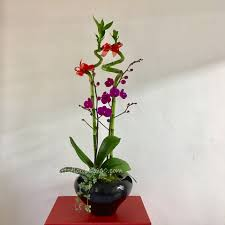 erfly phalaenopsis orchid lucky bamboo arrangement