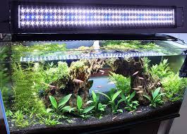 Marineland Aquatic Plant Led Lighting System Review Aquarium Lighting The Aquarium Setup Filtration And