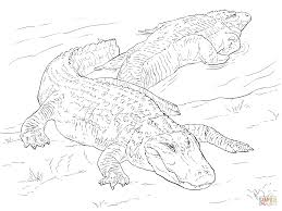 Small Picture Two American Alligators coloring page Free Printable Coloring Pages