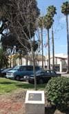 Ida Daniels Berk, Ph.D. - East Palo Alto, CA - Dedicated Trees on  Waymarking.com