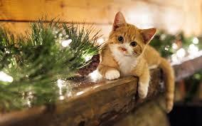 Cute Christmas Cat Wallpapers - Top ...