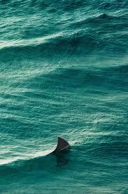 ocean tumblr vertical. Photo Ocean Tumblr Vertical O