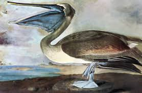 image is loading audubon brown pelican canvas or print wall art on pelican canvas wall art with audubon brown pelican canvas or print wall art ebay