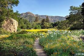 Image result for garden meadow