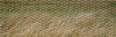 wild grass texture. Ground Textures Wild Grass Texture E