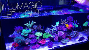 illumagic makes some really cool led lights reef builders