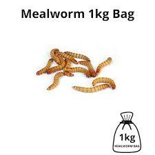 Mealworm Size Chart Mealworm 1kg Bag