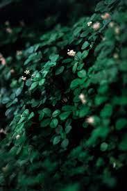 Dark Green Wallpaper Pictures ...