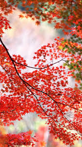 Autumn Leaves Wallpaper For Android ...