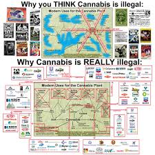 Green Money The Cannabis Deep Follow Prohibition