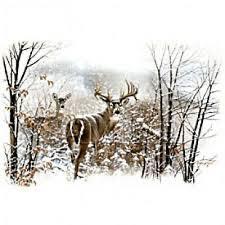 Whitetail Deer Size Chart Mens Or Womens Whitetail Deer Hunting Sweatshirt Or Hoodie Sm 3xl Shirt New Ebay