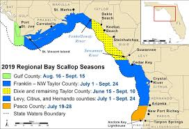 Florida Fishing Seasons Chart Scalloping In Florida Florida Go Fishing
