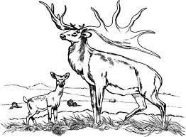 Small Picture Bull Elk and Baby Elk Coloring Pages Download Print Online