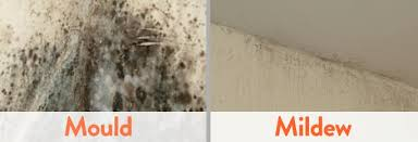 get rid of mold mildew on the walls