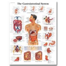 Us 5 89 Mq2115 Human Anatomy Interactive Chart Health Body Skull Medical Hot Art Poster Top Silk Light Canvas Home Decor Wall Printings In Painting