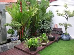 Small Picture Outdoor Tropical Plants For Small Garden Design With Dark Wooden