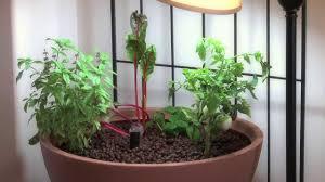 small aquaponic indoor or patio mini garden