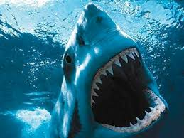 shark s blog great white shark south