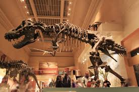 """「""""Castle,"""" visitors to Washington, D.C., tour the National Museum of Natural History,」の画像検索結果"""