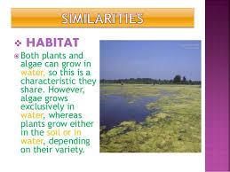Plant And Animals Adaptations Venn Diagram Similarities And Dissimilarities Of Algae And Plants