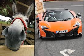 court asks if donkey at fault for mistaking orange sports car for carrot