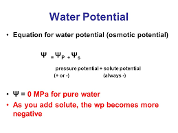 Water Potential Equation Ap Bio Exam Review Ppt Video Online Download