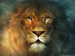 Lion Desktop Wallpapers Wallpapers HD ...