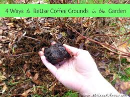 4 tips to reuse coffee grounds in the garden melissaknorris