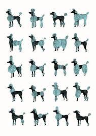 Dog Haircut Chart Modern Poodle Grooming Chart Illustration Print Pup Art