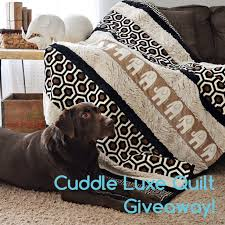 Sewciety – My Cuddle Corner – Shannon Fabrics & Cuddle Luxe Quilt Kit Giveaway Adamdwight.com