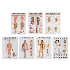 Acupressure Chart 3 Pcs 7pcs Acupuncture Massage Point Map Chinese English