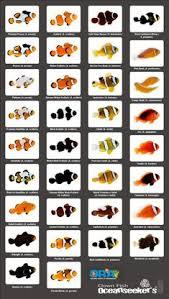 23 Best Clownfish Images Fish Fish Wallpaper Beautiful Fish