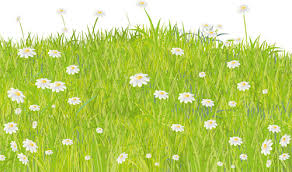 grass transparent background. Summer Grass Vector Background Transparent