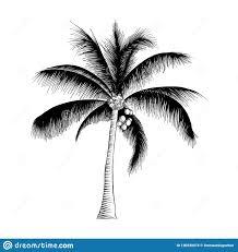 эскиз руки вычерченный пальмы в черноте изолированной на белой