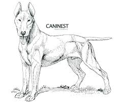 Realistic Puppy Coloring Pages Realistic Puppy Coloring Pages Wolf