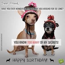 Happy Birthday Funny Quotes Magnificent Cracking Birthday Jokes Huge List Of Funny MessagesWishes