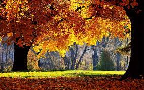 Windows Autumn Wallpapers - Wallpaper Cave