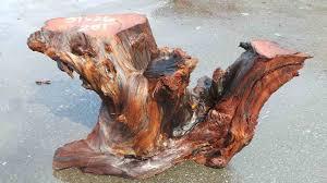 rustic table bases redwood cedar manzanita bases redwood burl