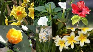 all flowers name in hindi and english